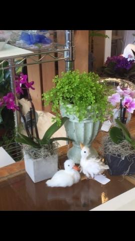 Orchid Plants, Fern