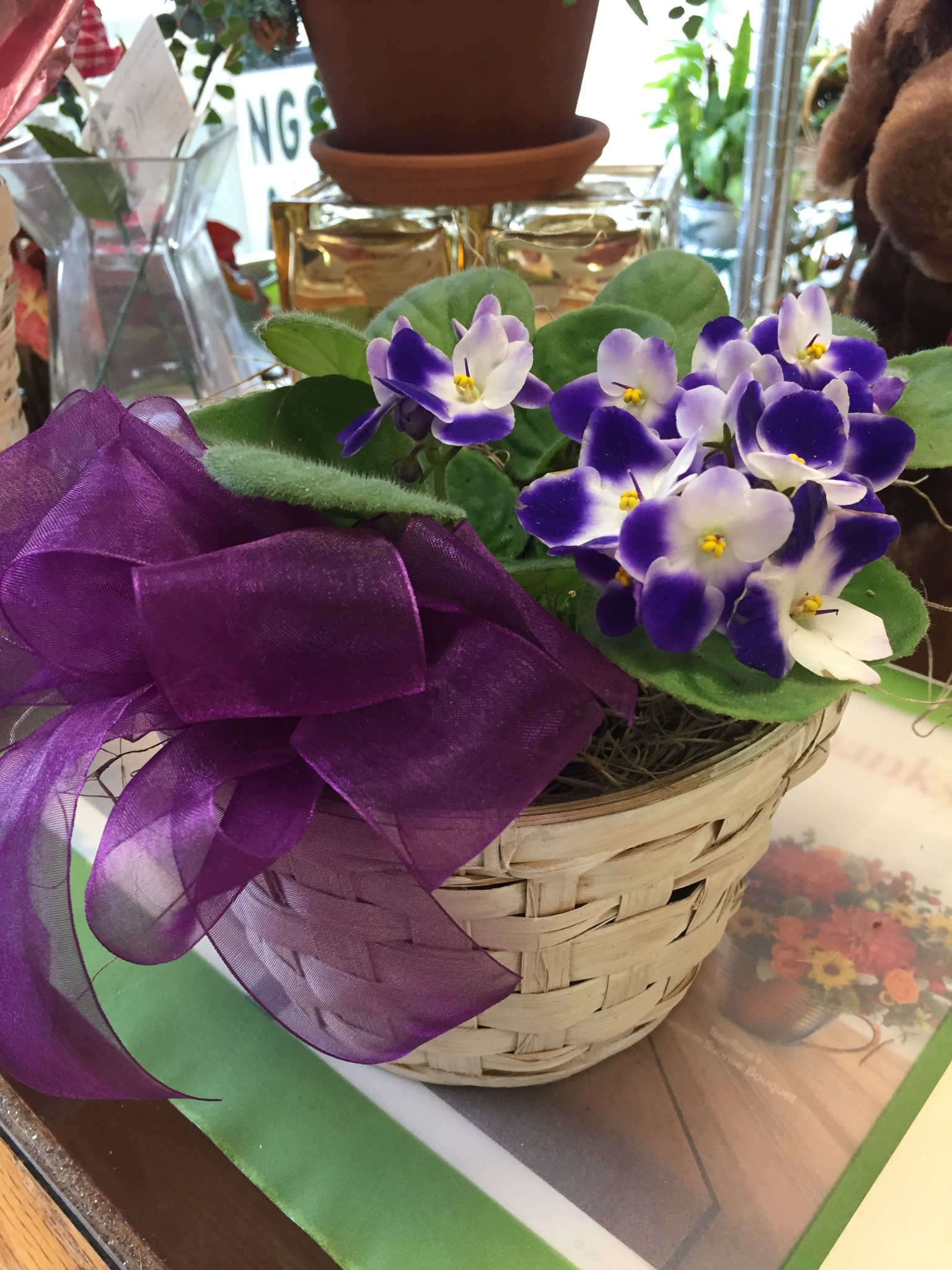 Single African Violet Basket